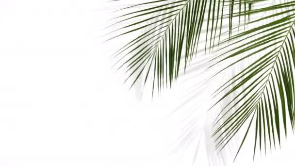 Pohyb tropických palmových listů