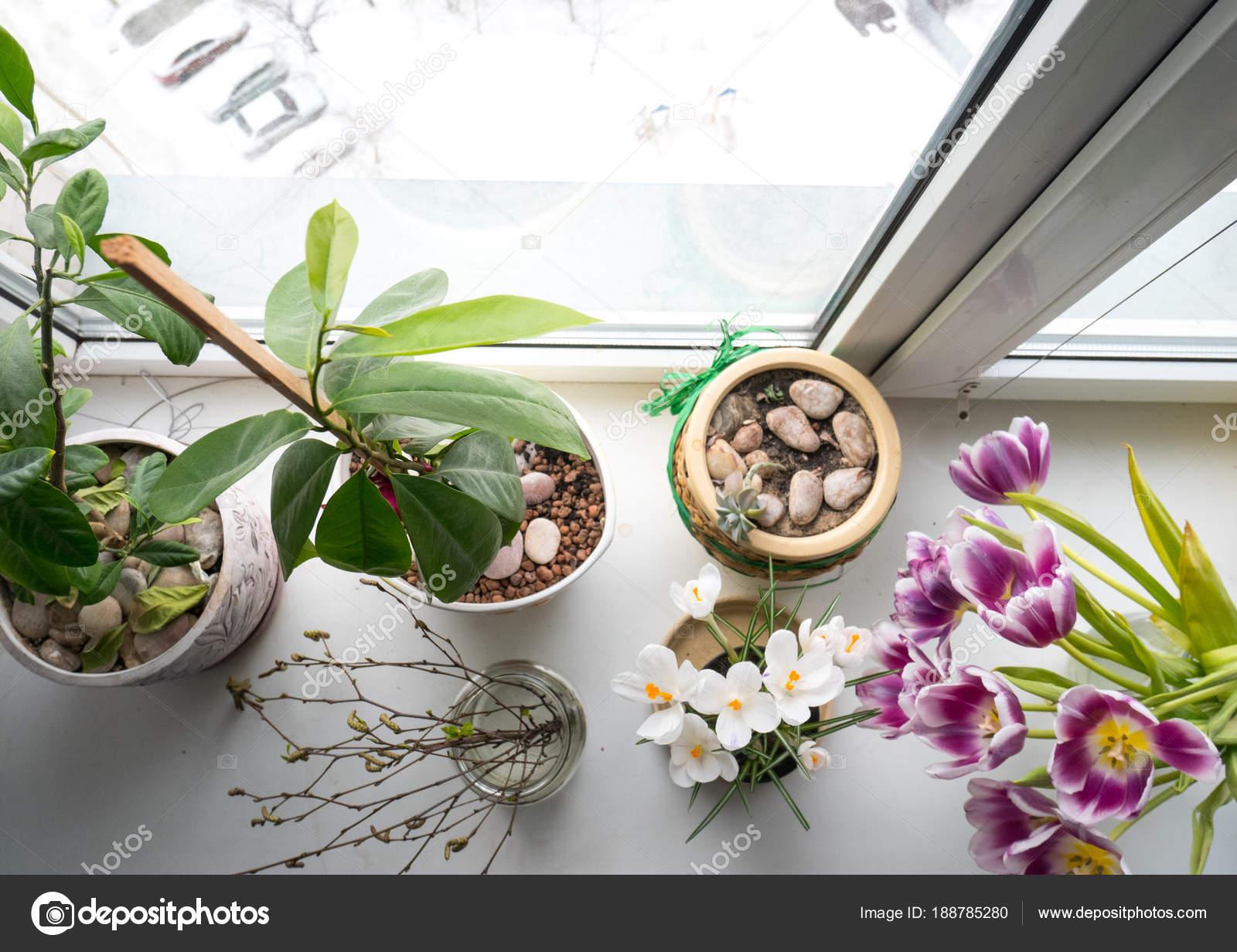 Blumen Für Die Wohnung leben sie blumen in einem topf auf der fensterbank in der wohnung