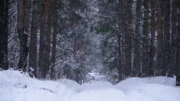 Alberi innevati durante una nevicata