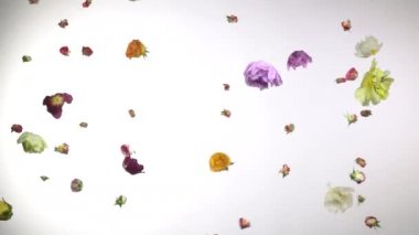 Beautiful flowers fly in the air on a white background