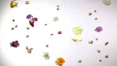 Fresh flowers slowly rotate in the air, slow motion