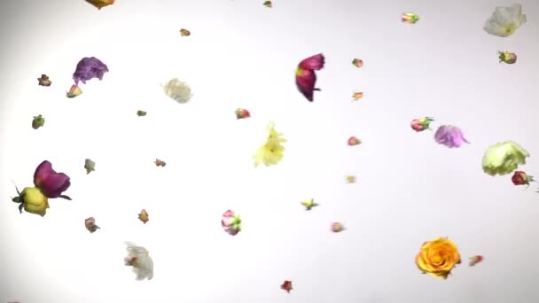 Multicolored fresh flowers fly against a white background