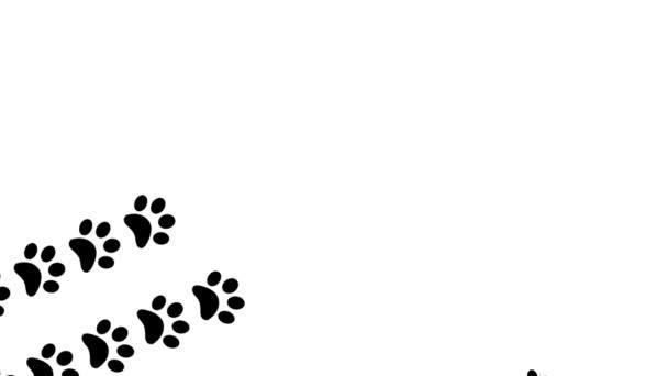 Mancs nyomatok állati láb láb lábnyomok pawprints kutya macska átmenet 4k