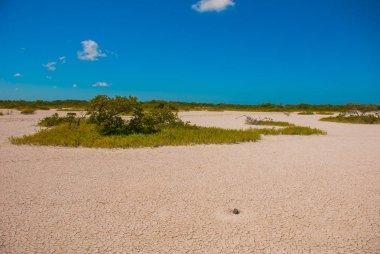 Cracked earth in white clay. Rio Lagartos Yucatan, Mexico