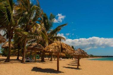 Tropical landscape with yellow sand, blue Caribbean sea, coconut palms and umbrellas. Cienfuegos, Cuba, Rancho Luna Beach.