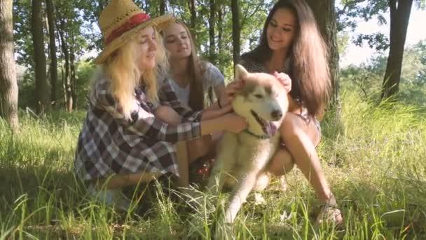 Mädchen spielen mit Siberian Husky Hund im park