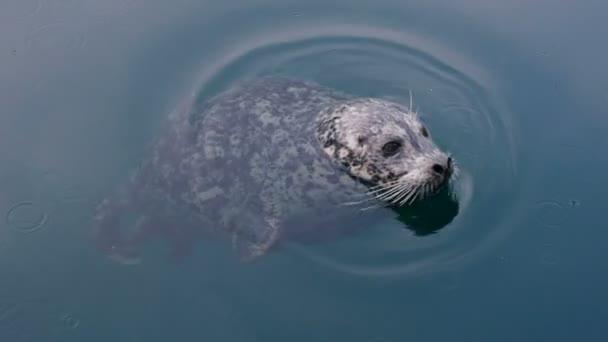 wild cute seal in ocean