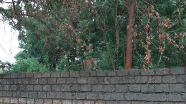opice na přírodu v Keni,