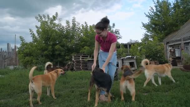 Ehrenamtliche im Tierheim spielt mit Hunden