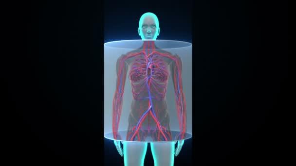 женское организм видео
