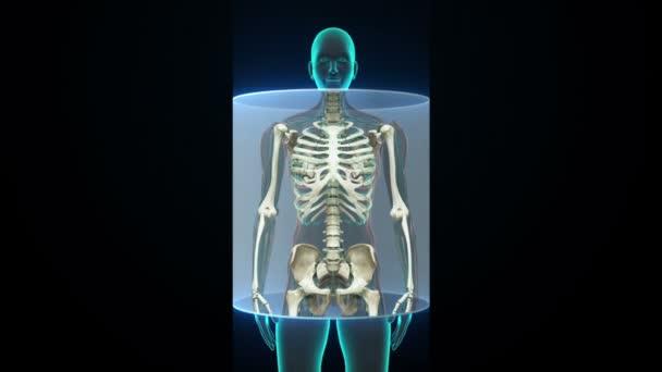 Weiblichen Körper Zoomen und Scannen menschlichen Skelett-Struktur ...