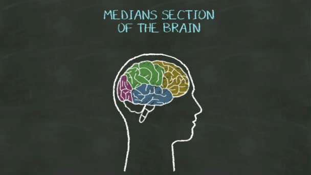 Kézírás emberi felező szakasz az agy a chalkboard.