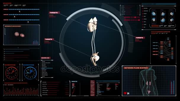 Skenování ledviny v řídicím panelu digitální displej. Rentgenové zobrazení