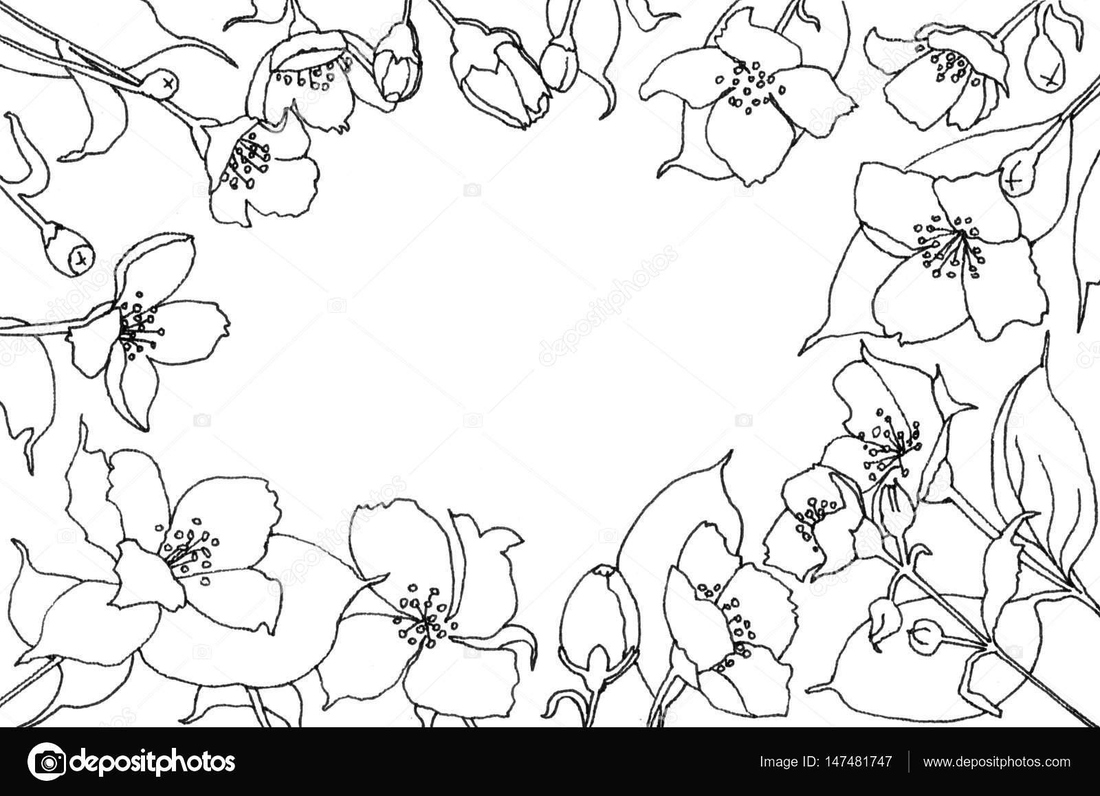 Dibujo de lápiz de flores de jazmín — Foto de stock © Khalaziy ...