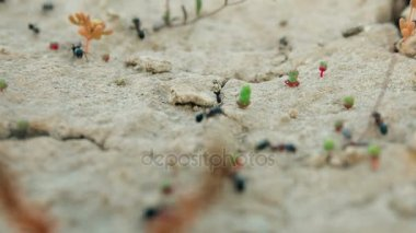 Colony Ants carry supplies in a hole in the ground close-up.