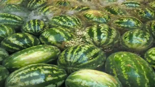 Lot of watermelons liee in the water. Fruits background