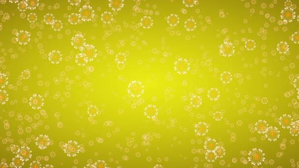 Blooming Marguerite Daisy Flowers On Yellow Background