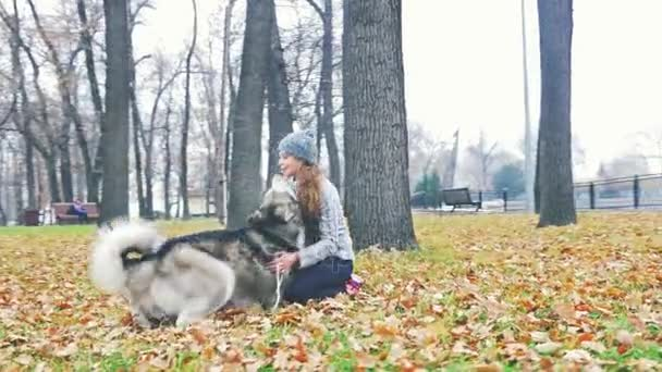 Obrázek mladá dívka si hraje se svým psem, Aljašský malamut