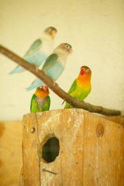 Bright exotic parrots