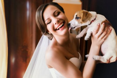 Little dog licks a bride's face