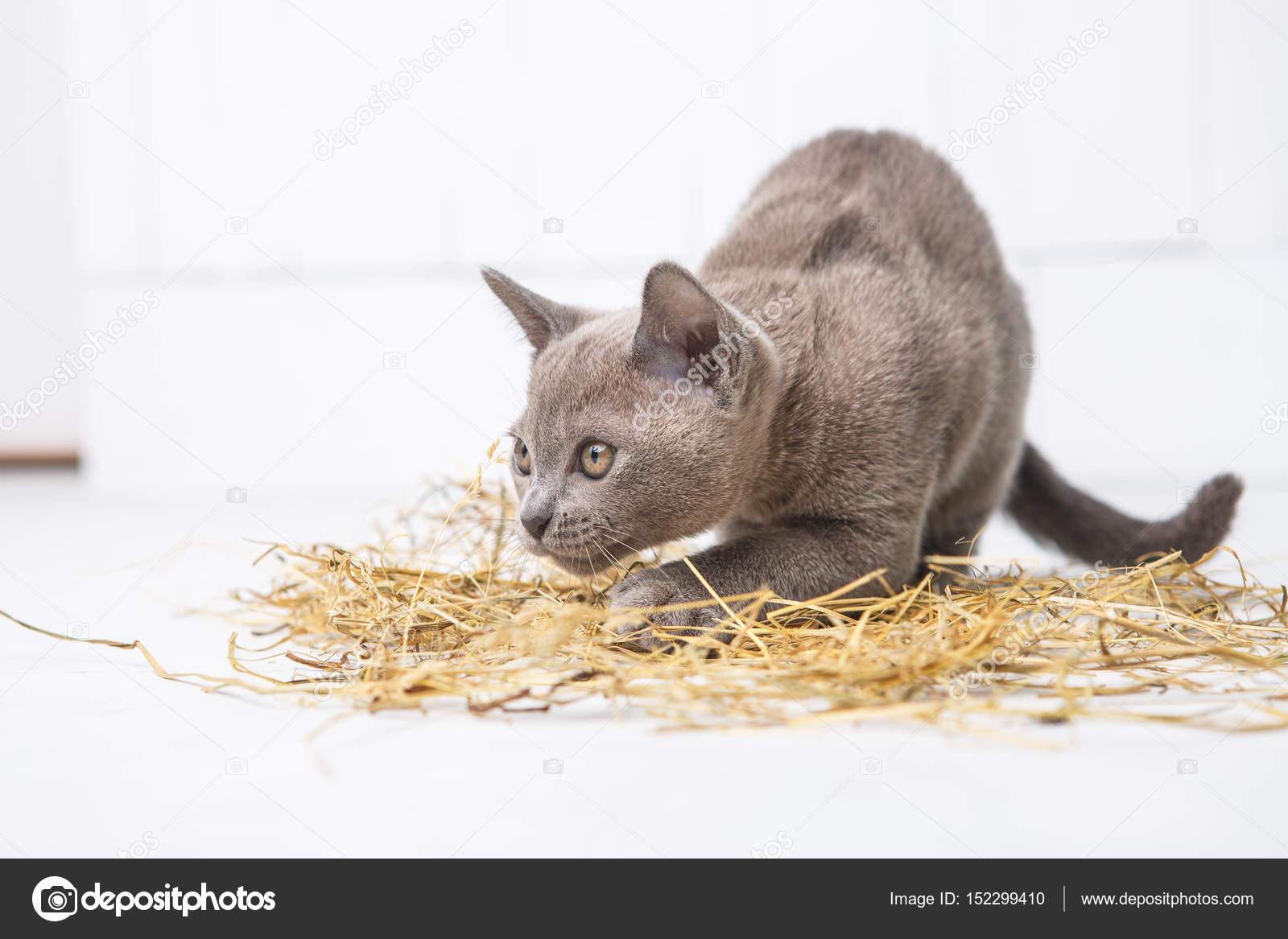 白い木製の床にわらで遊び心のある猫ジャンプ、狩りは、