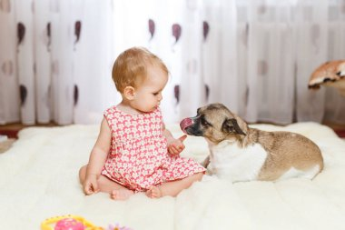 Little funny Caucasian girl the child sits at home on the floor on a light carpet with the best friend of the half-breed dog with spotty color and short hair and funny big ears. Baby is eating cookies