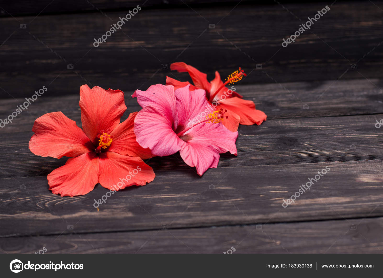 Hibiscus flowers black boards stock photo foras05 183930138 hibiscus flowers black boards stock photo izmirmasajfo