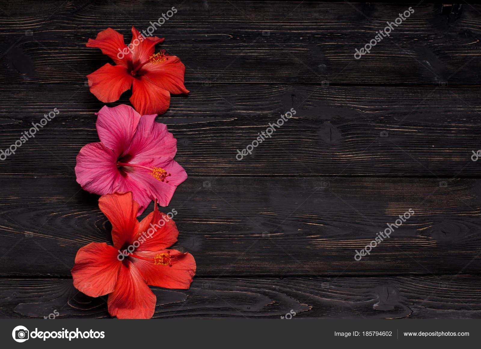 Red hibiscus flowers black background stock photo foras05 185794602 red hibiscus flowers black background stock photo izmirmasajfo