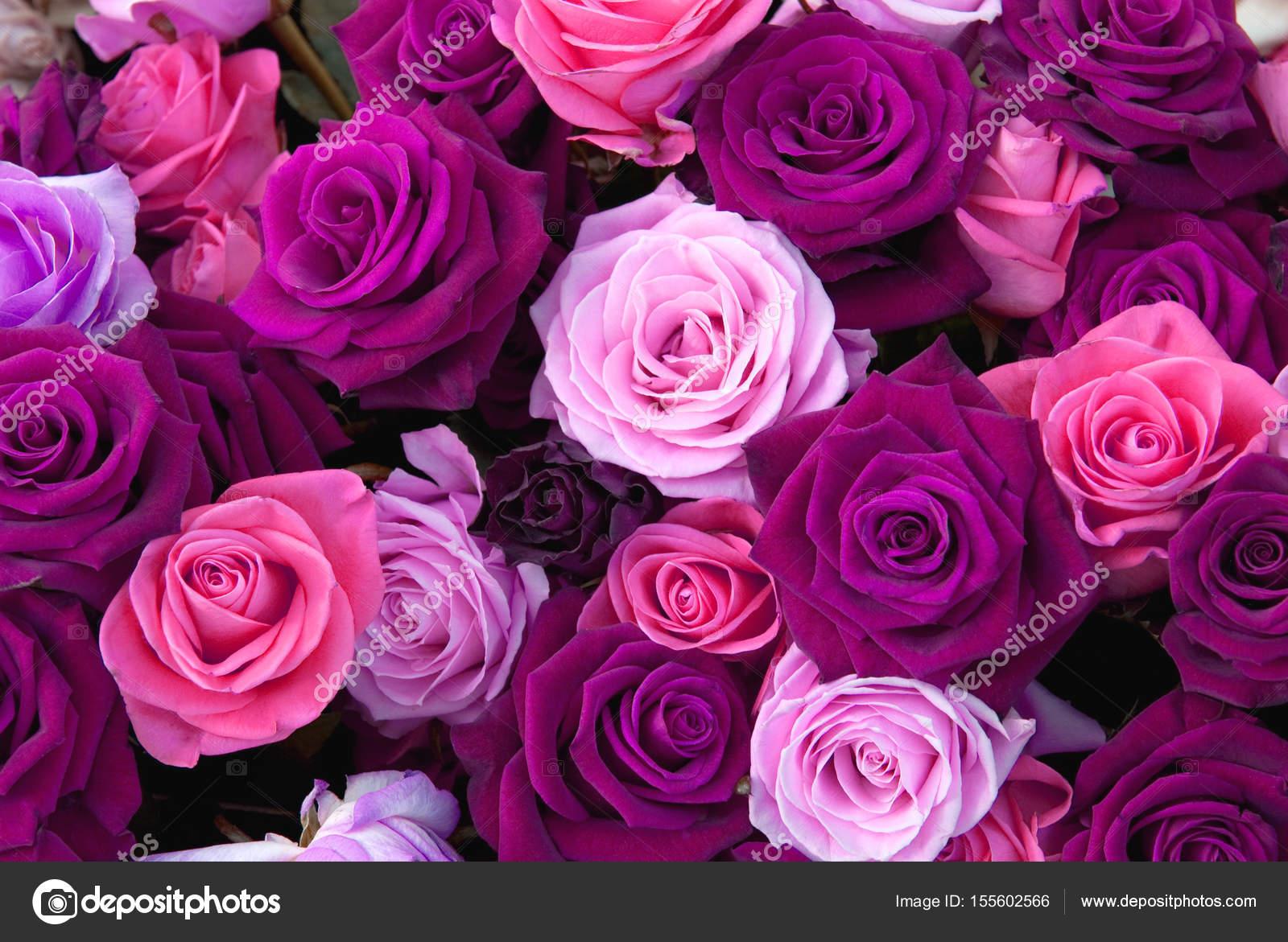 Diferentes Colores De Las Rosas Fotos De Stock Nikusha1606