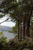 Paesaggio di laghi di Kllarney