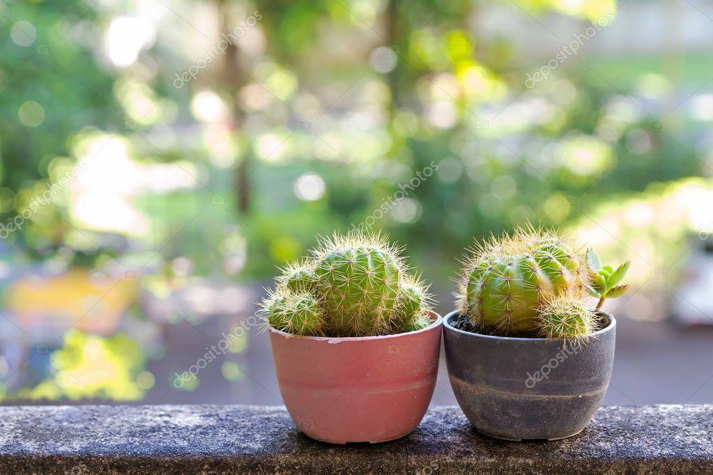 Kaktus W Małe Doniczki Zdjęcie Stockowe Kararkar 129849200