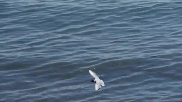 Racek létání v moři