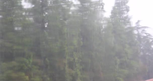 4k Fenster Regentropfen, schwankender Baum.