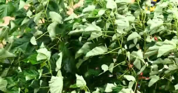 4k vítr, třes listy, letní listové rostlina farma, lesní příroda zahrada