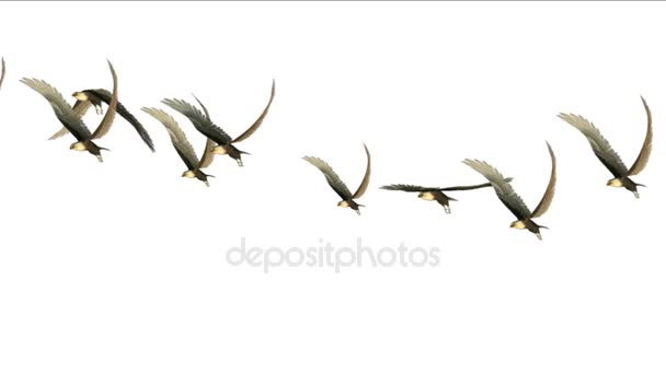 4k Scharen von Tauben fliegen Vögel über Zugvögel Tier Adler Hintergrund