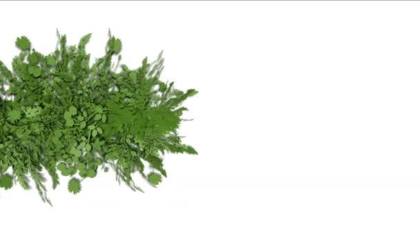 4 k svěží květinové listy keře keře rostlin trávy rostoucí plodiny.