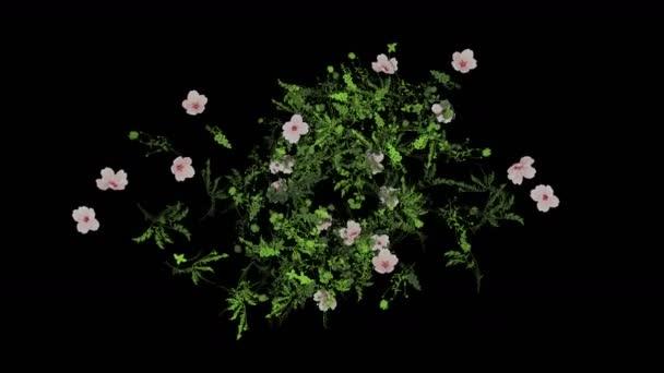 4 k buja virág szirom levelek növények bokrok bokrok növény fű növekvő háttér.