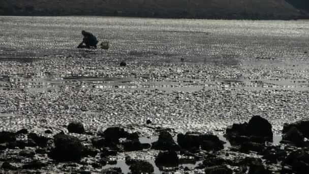 Kopat škeble rybáři na pláži, ebb