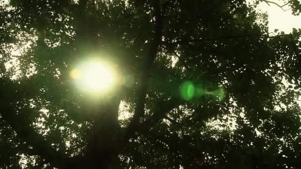 Sluneční světlo prostřednictvím poboček kmen stromu ginkgo listy