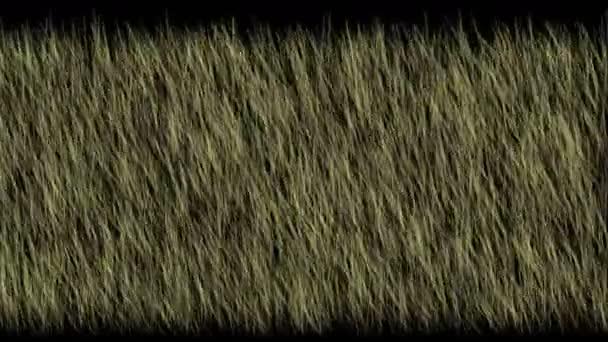 4 k zelené trávě pole rostlina v noci, ekologie travnaté pastviny pastviny pozadí