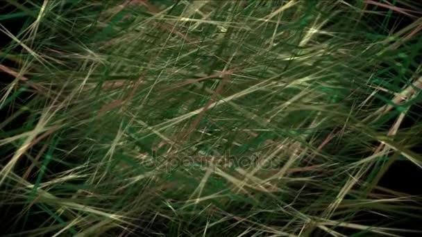 4 k travní plevele pastvin zázemí, bylinné čaje, zelené rákosí keřů rostliny pozadí
