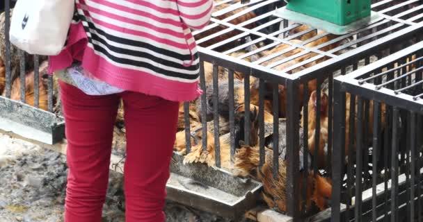 4 k skupina kuře v kleci, shangri-la trhu, yunnan Čína