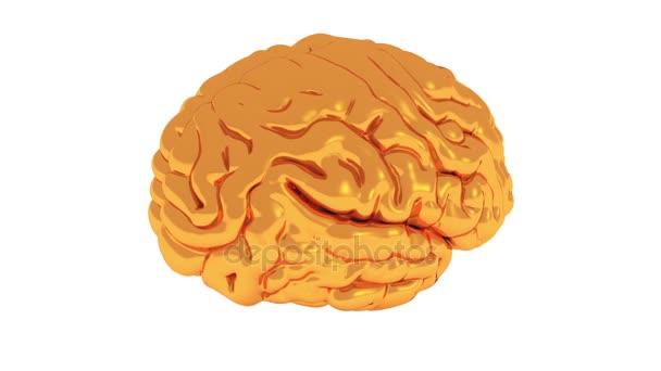 4k forgó golden brain-modell, a mesterséges intelligencia.
