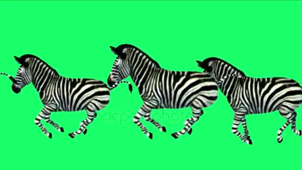 4 k skupina zebry koně běhu, Afrika louky migrace zvířat siluetu osli