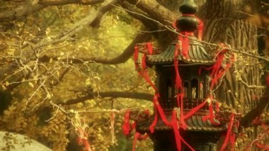 Incense burner and ginkgo tree in wind,monuments,antiques,culture.
