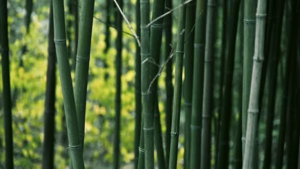 vítr třásl bambus, klidnou atmosféru.