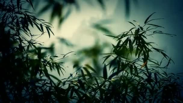 szél rázza a bambusz, csendes környezetben, napsütésben.