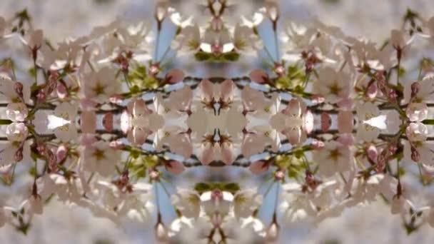 krásné Třešňové květy se chvějí ve větru, kaleidoskop