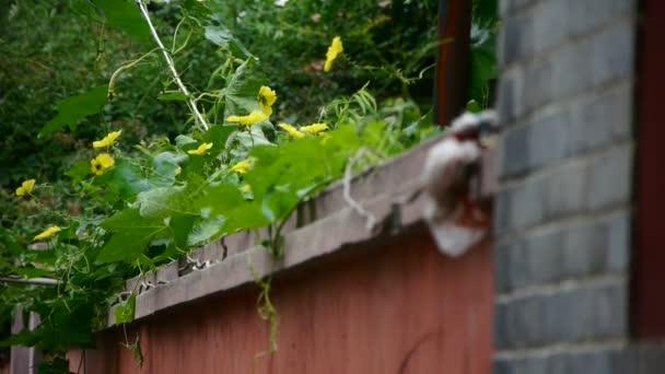 Zeď květina, svěží zelené rostliny na cihlové zdi