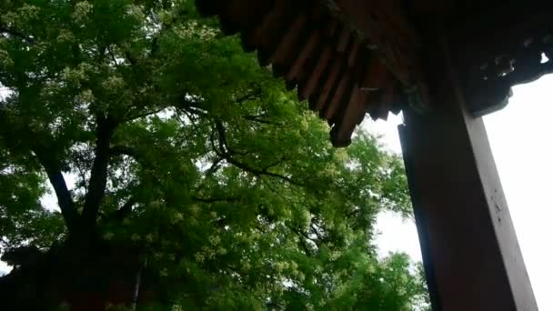 Chinese ancient building eaves under lush green trees,breeze blowing leaves.